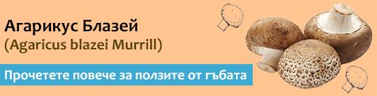 Прочетете актуална и научна информация за гъбата Агарикус (Agaricus blazei)