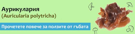 Прочетете актуална и научна информация за гъбата Аурикулария (Auricularia polytricha)
