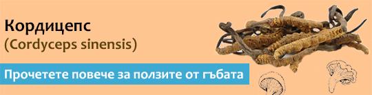 Прочетете актуална и научна информация за гъбата Кордицепс (Cordyceps sinensis)