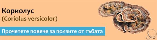 Прочетете актуална и научна информация за гъбата Кориолус (Coriolus versicolor)