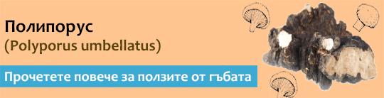 Прочетете актуална и научна информация за гъбата Полипорус (Polyporus umbellatus)
