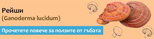 Прочетете актуална и научна информация за гъбата Рейши (Ganoderma lucidum)