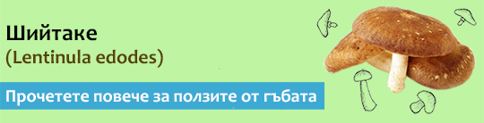 Прочетете актуална и научна информация за гъбата Шийтаке (Lentinula edodes)