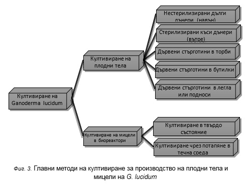 Главни методи за култивиране на Ganoderma Lucidum