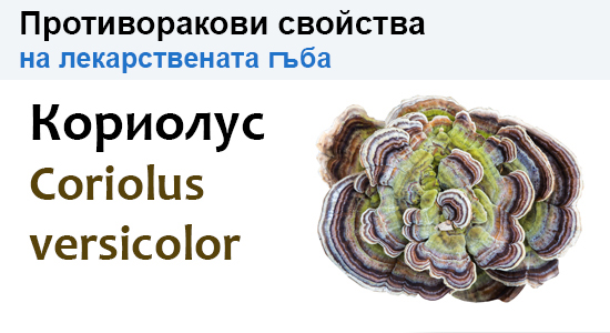 Гъбата Coriolus versicolor (Кориолус) и противораковите свойства на нейните полизахариди