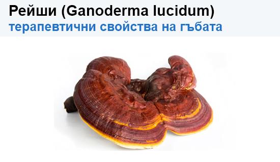 Рейши (Ganoderma lucidum) – потенциални терапевтични свойства на гъбата върху човешкото здраве