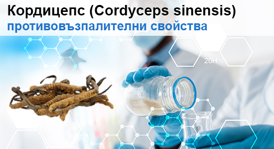 Проучване: Гъбата Кордицепс (Cordyceps) и нейните противовъзпалителни свойства