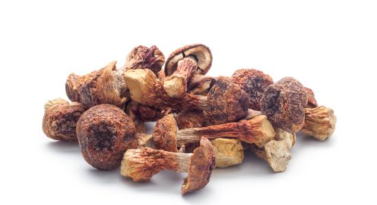 Гъбата Агарикус (Agaricus blazei) и нейните свойства при превенцията и лечението на рака