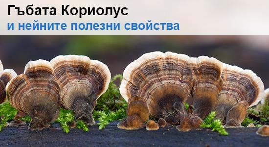 Кориолус (Coriolus versicolor) – полезни свойства