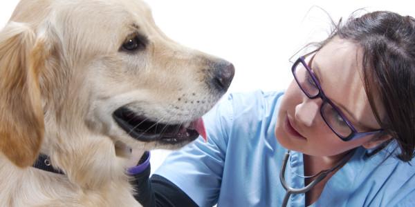 рак на хора третиран с гъби и животни